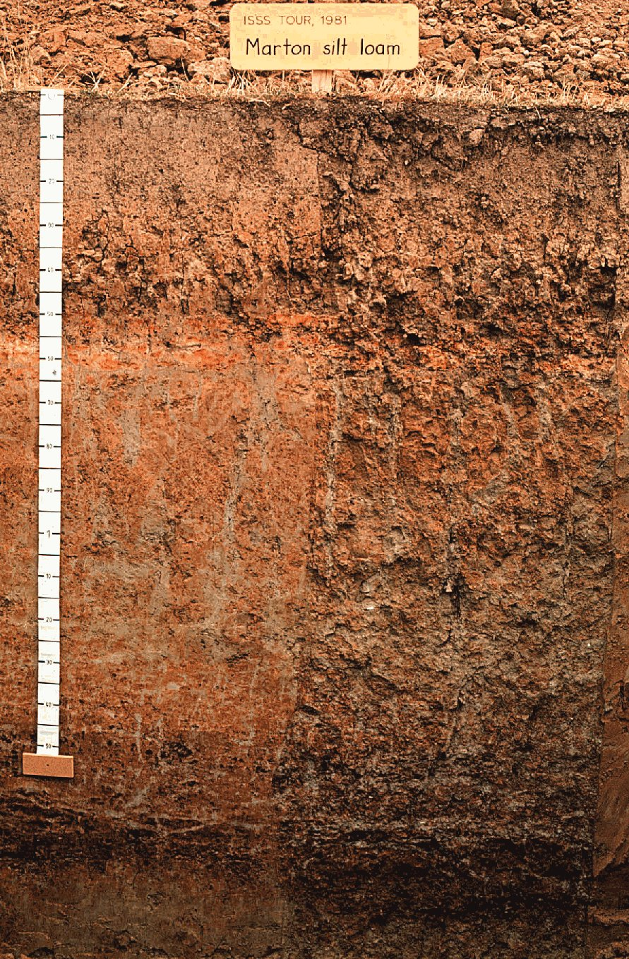 Silt loam soil images galleries with for T and t soils
