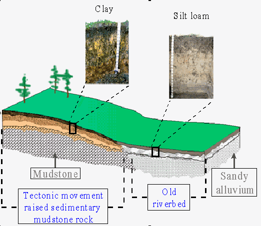 Soil formation topography for Formation of soil diagram