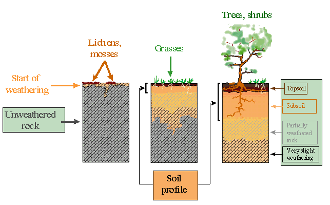 Soil formation time for Soil and its formation