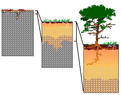 Soil Formation Sequence Diagram